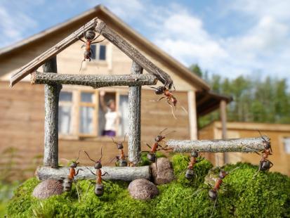 Mrówki w mieszkaniu? Wypłosz niechcianych gości!
