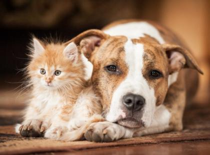 Myślisz, że w zwierzętach uczula nas ich sierść? To mit, problemem jest coś innego!