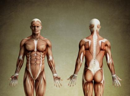 Na czym polega analiza składu ciała?