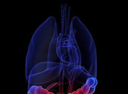 Trzustka ma dwie zasadnicze funkcje: hormonalną i trawienną. Enzymy trzustkowe wydzielane są do dwunastnicy, gdzie po ich aktywacji rozpoczyna się proces trawienia./ fot. Fotolia