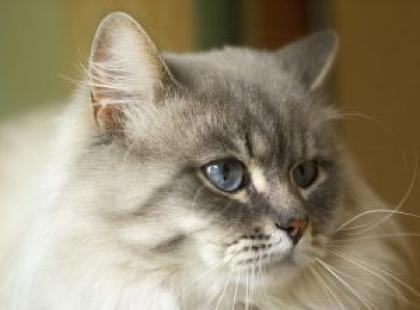 Nadwaga u kota - jak z nią walczyć?