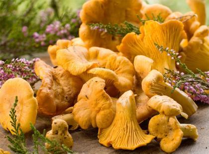 Najlepsze potrawy z grzybów