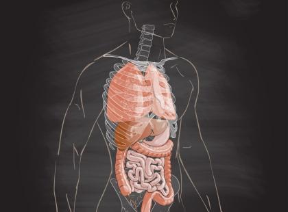 Najnowsze odkrycie naukowców: mamy w ciele nowy organ!