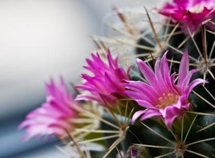 Najpiękniejsze kaktusy, które warto mieć!