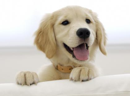 Najważniejsze witaminy dla psa w codziennej diecie
