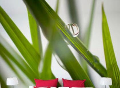 Naklejki ścienne, czyli sposób na dekoracje Twojego domu