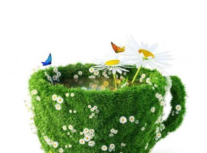 Napoje herbaciane z czystka - przepisy