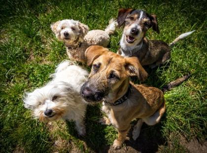 Nasz ranking 10 najładniejszych ras psów - głosuj i ty! Nam trudno wybrać jednego faworyta!