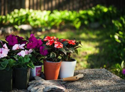 Kwiaty Na Balkon Północny Sprawdź Jakie Kwiaty Wybrać