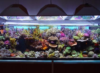 Natlenianie wody w akwarium