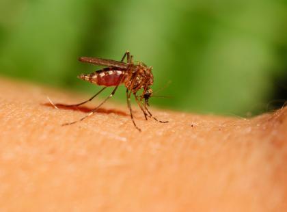 Naturalne metody na użądlenia i ukąszenia owadów