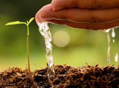 Naturalne nawozy: kompost, torf, gnojówka