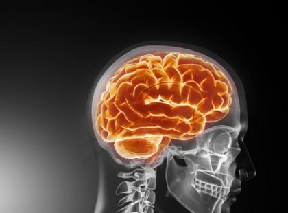 Nerwy czaszkowe - vademecum