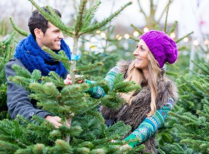 Nie czekaj z zakupem choinki w doniczce do Bożego Narodzenia. Teraz kupisz najlepszą