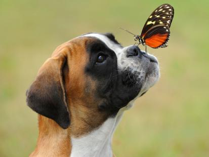 Nie wiesz, jak nazwać swojego psa? Oto top 25 imion dla suczek!