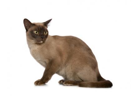 Niepokojące objawy u kota