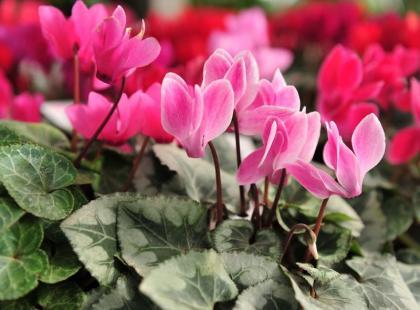 Niewiarygodne! Poznaj 5 sposobów na uratowanie obumarłej rośliny!