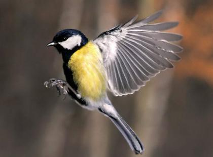 O czym pamiętać fotografując ptaki?