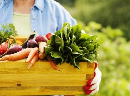 Obalamy mit: zobacz, jak łatwo uprawiać warzywa!