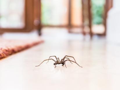 Obudziła się cała pokąsana, później zaczęła mieć halucynacje. Okazało się, że w jej mieszkaniu zadomowiły się jadowite pająki