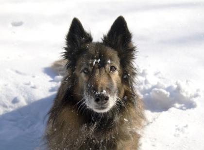 Ochrona psa przed mrozem