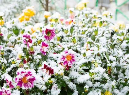 Ogród przed zimą: 4 ostatnie prace