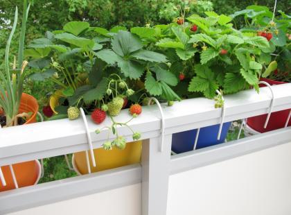 Ogródek na balkonie - co zasiać?