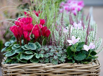 Oto 7 najbardziej odpowiednich kwiatów doniczkowych, które pasują na prezent