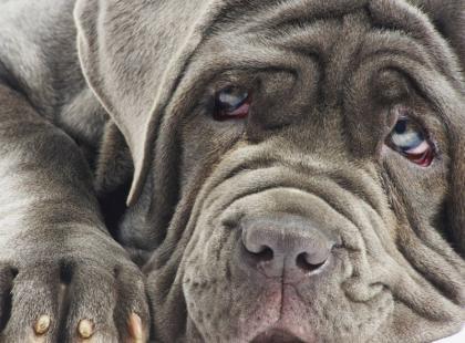 Oto ranking 5 najdroższych zwierzaków świata