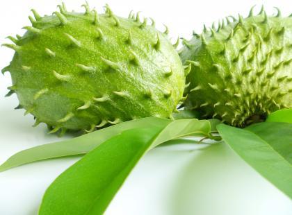 Owoc gravioli a chemioterapia