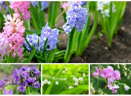 Pachnące kwiaty na balkon i do ogrodu