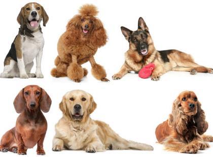 Padaczka u psów – jak ją rozpoznać i leczyć?