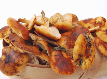 Pasteryzowanie grzybów