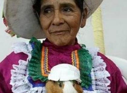Peruwiański festiwal świnek morskich