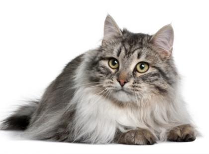 Pielęgnacja kotów od stóp do głów