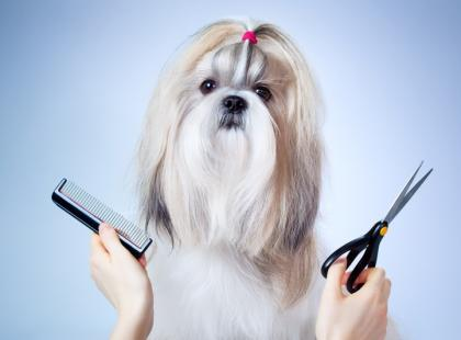 Pielęgnacja psa - poradnik