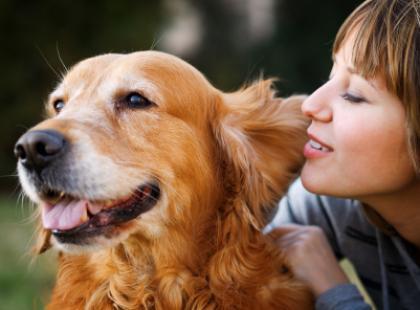 Pies a nowy członek rodziny