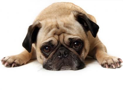 Pies boi sie ludzi - jak go ośmielić?