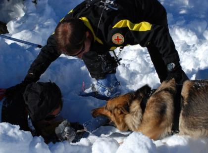 Pies ratowniczy, czyli nadzieja na czterech łapach