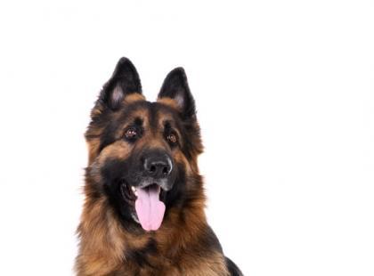 Pies ucieka za właścicielką z posesji