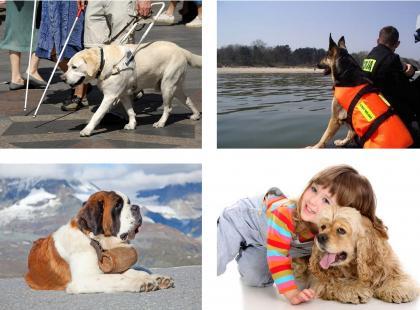 Pies w służbie człowiekowi