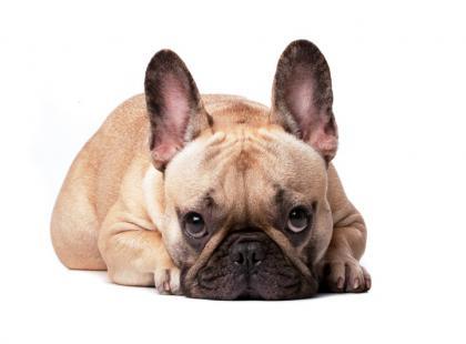 Pies załatwia się w domu, bo nie mam czasu na spacery - co robić?