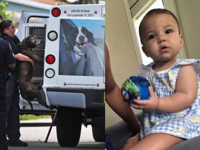 Pitbull rozszarpał 9-miesięczne dziecko. Dziewczynka nie przeżyła. Czy można było uniknąć tej tragedii?