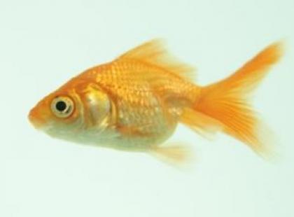 Po czym poznać zdrową rybę?