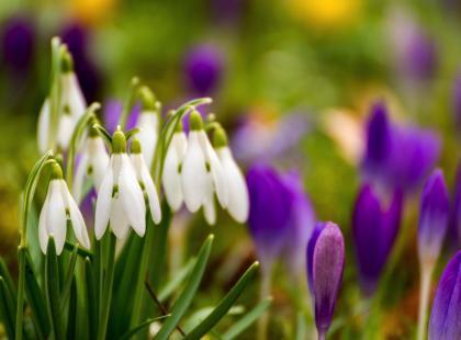 Po czym poznać, że nadchodzi wiosna? 7 oznak wiosny