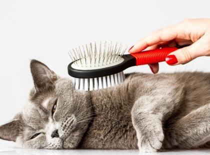 Podstawowe zasady pielęgnacji kotów
