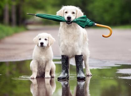 Pogoda tygodniowa - poznaj prognozę pogody od 17 do 23 lipca