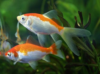 Pokarm dla rybek - jaki wybrać?
