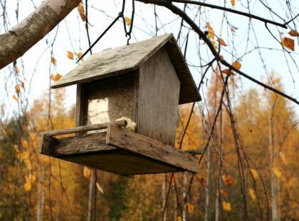 Pomóż ptakom zimą - jak je prawidłowo dokarmiać?