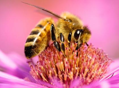 Pomóżmy pszczołom!